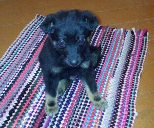 Отдам щенка в хорошие добрые руки. Фото 4. Биробиджан.