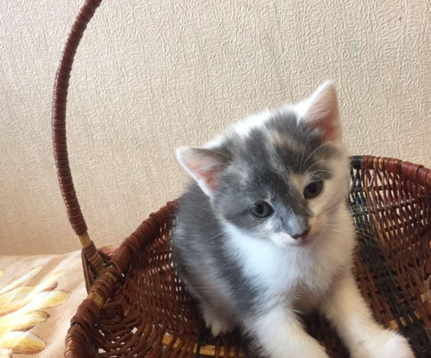 Котята бесплатно. Фото 1. Нижний Новгород.