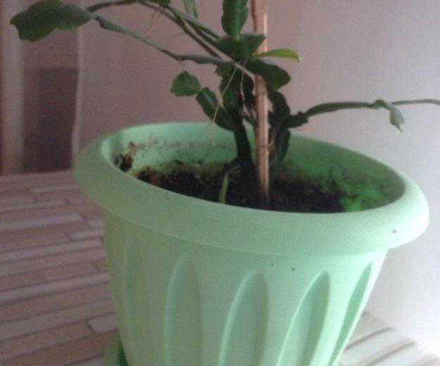 Комнатные растения. Фото 3. Владивосток.