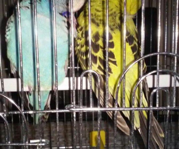 Передержка попугаев. Фото 1. Санкт-Петербург.