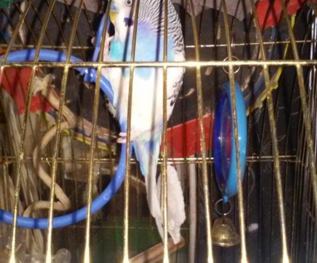 Передержка попугаев. Фото 4. Санкт-Петербург.