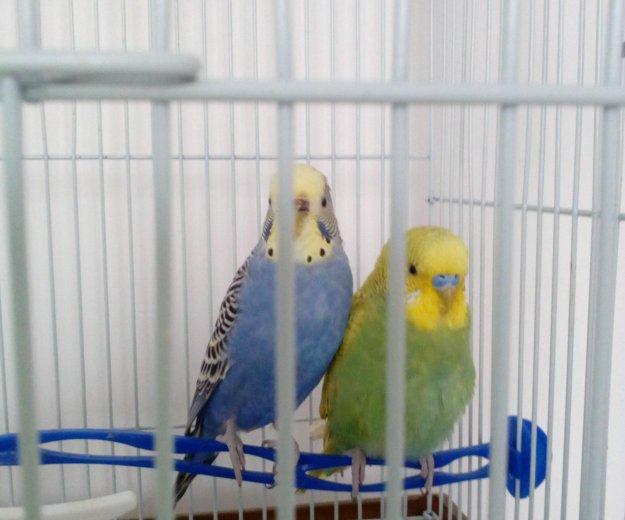 Попугаи. Фото 1. Власиха.