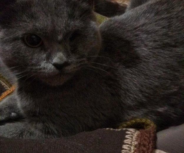 Кошка. Фото 2. Ставрополь.