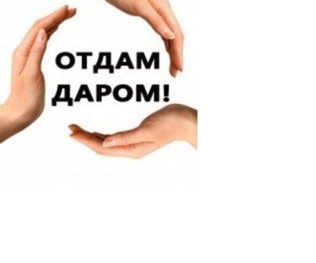 Отдам. Фото 1. Нефтеюганск.
