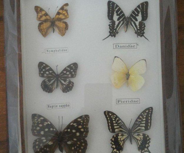 Коллекция бабочек. Фото 1. Омск.