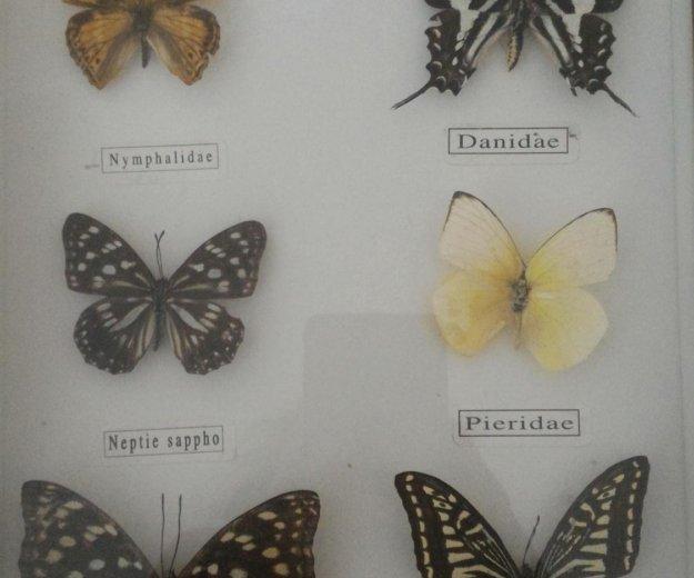 Коллекция бабочек. Фото 2. Омск.