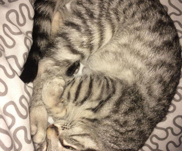 Котенок 2 месяца девочка. Фото 4. Москва.
