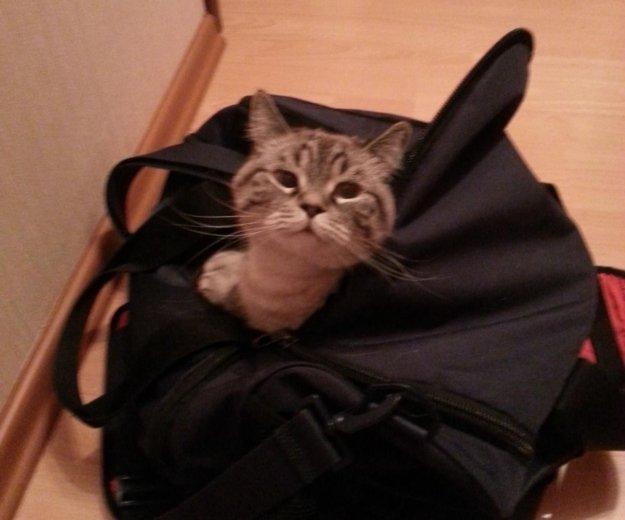 Отдадим кота. Фото 2. Москва.