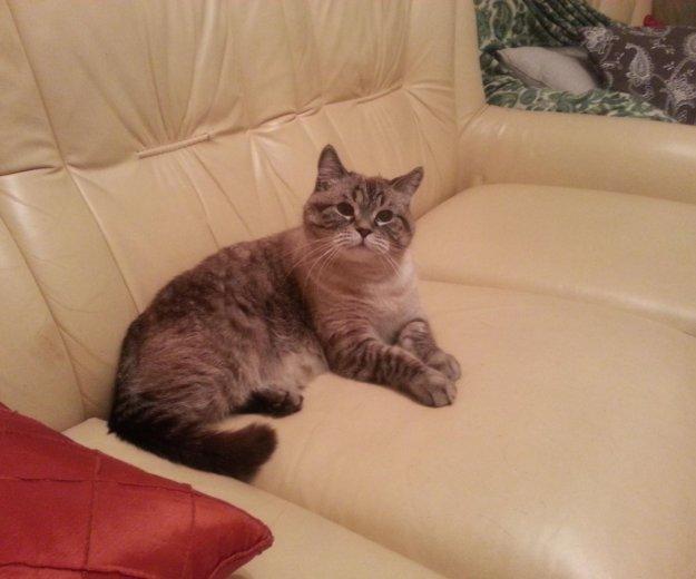 Отдадим кота. Фото 3. Москва.