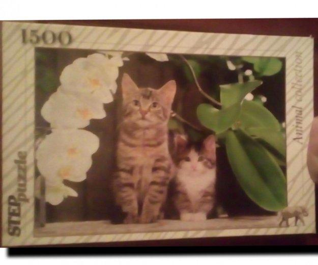 Пазлы котята и лотосы. Фото 1. Санкт-Петербург.