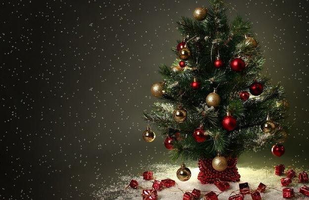 Живые новогодние елки, пихты, сосны. Фото 1. Москва.