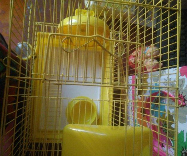 Клетка для крыс. Фото 4. Владивосток.