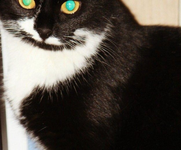 Кошка. Фото 3. Тюмень.