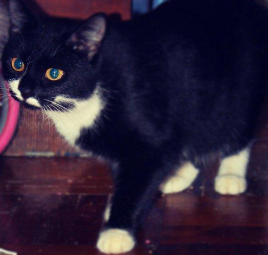 Кошка. Фото 4. Тюмень.
