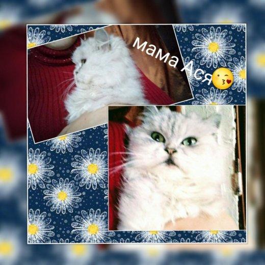 Внимание!!!!! продам котят!!!!. Фото 1.