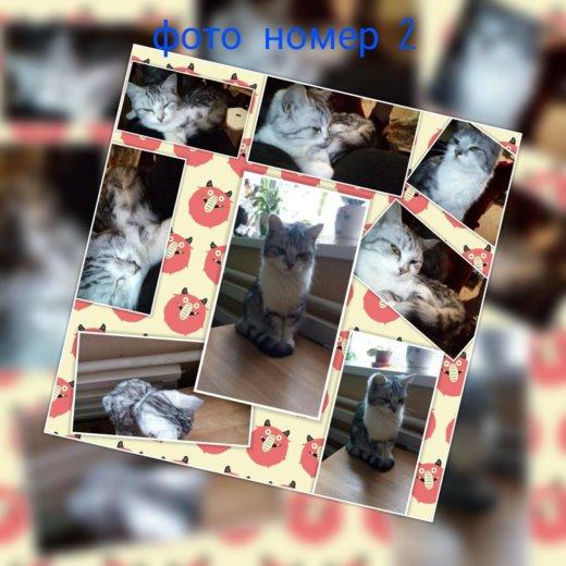 Внимание!!!!! продам котят!!!!. Фото 2.