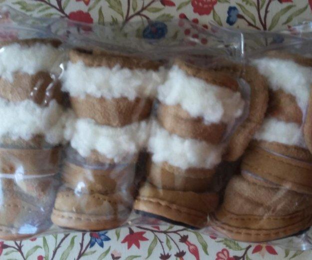 Ботинки для собачки. Фото 1. Екатеринбург.