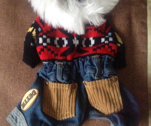 Новый костюм на собаку мини. Фото 3. Железнодорожный.