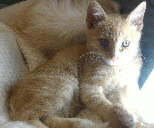 Котик степа ищет семью. Фото 1. Астрахань.