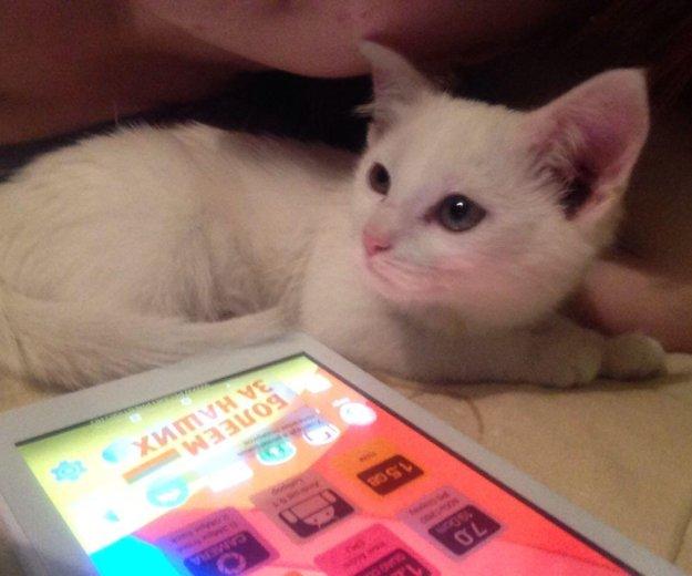 Кошечка в добрые руки. Фото 3. Орел.