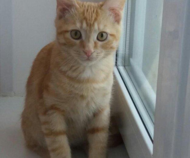 Отдадим котенка в добрые руки!. Фото 1. Балашиха.