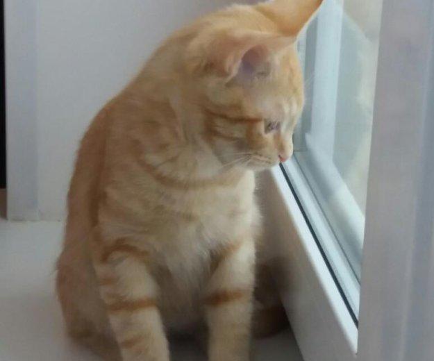 Отдадим котенка в добрые руки!. Фото 2. Балашиха.
