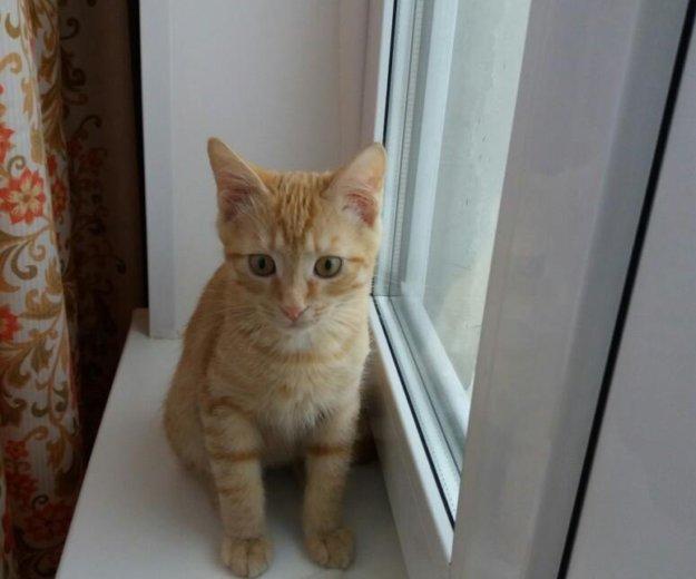 Отдадим котенка в добрые руки!. Фото 3. Балашиха.