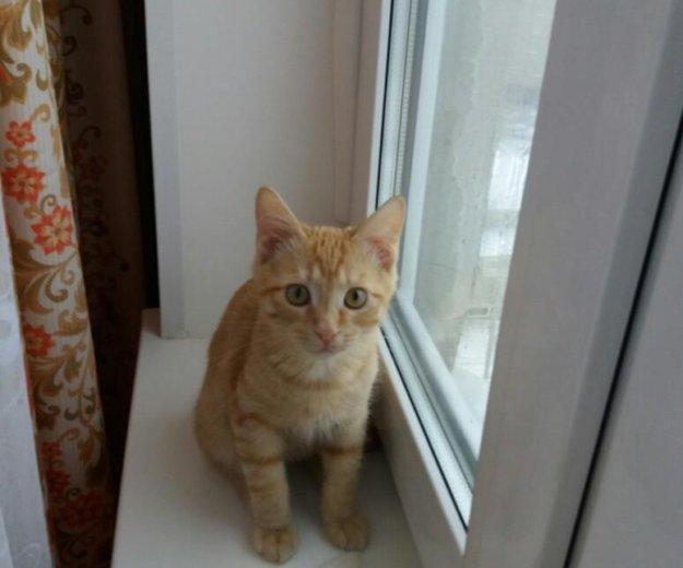 Отдадим котенка в добрые руки!. Фото 4. Балашиха.