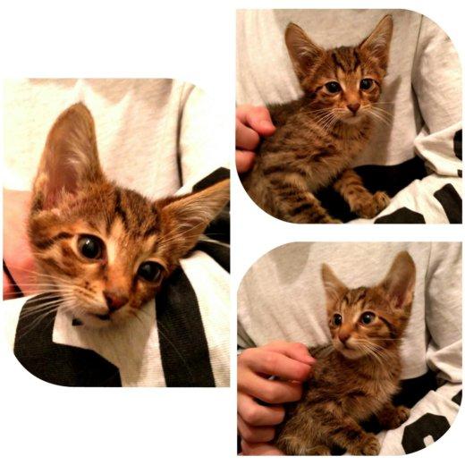 Котятки в добрые руки. Фото 1. Балашиха.
