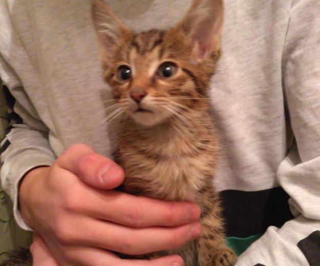 Котятки в добрые руки. Фото 2. Балашиха.