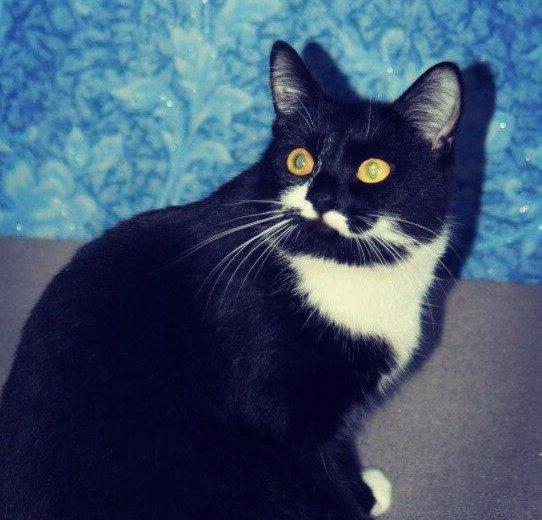 Кошка. Фото 1. Тюмень.
