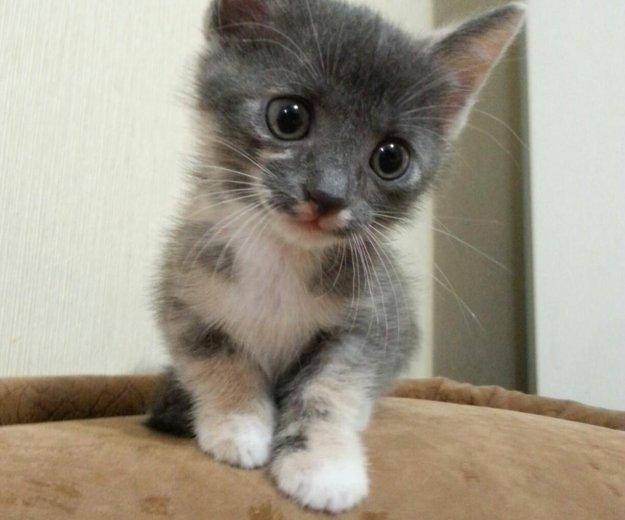 Отдам котят даром. Фото 1. Ангарск.
