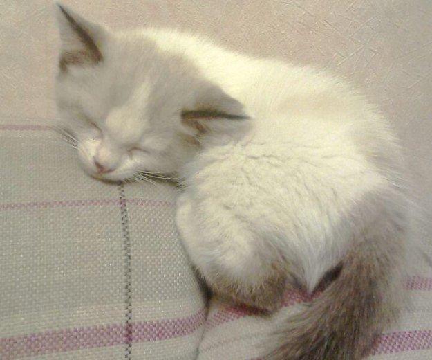 Кошечка в хорошие руки!!!. Фото 1. Новосибирск.