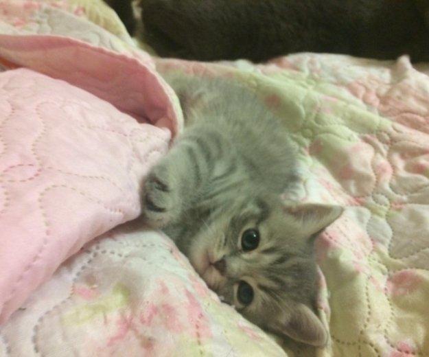 Котёнок 🐱. Фото 1. Киров.