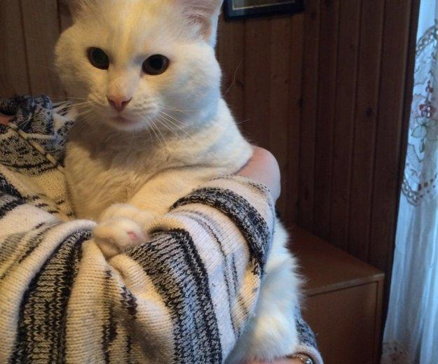 Кот в добрые руки, белый кот даром,котик тим. Фото 2. Москва.