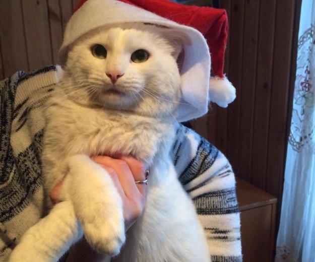 Кот в добрые руки, белый кот даром,котик тим. Фото 3. Москва.