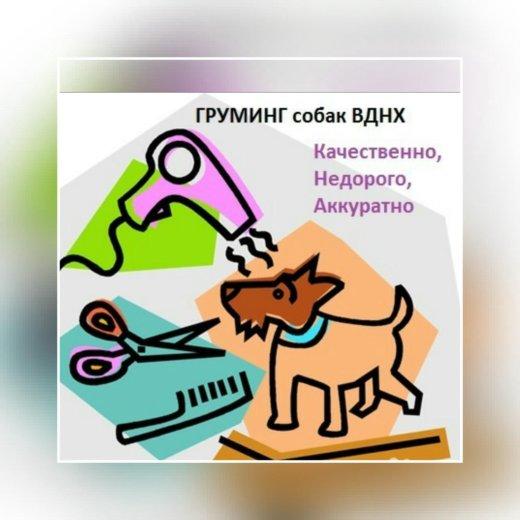 Груминг. стрижка, тримминг собак. вднх. Фото 1. Москва.