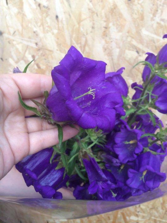 Цветы томске, описание букета колокольчиков
