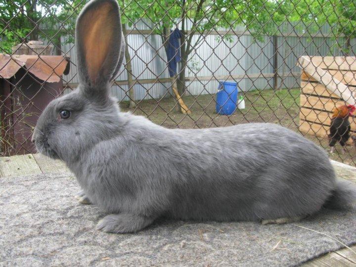 пасха относится найти кроликов с фото в рязани резные стойки часто