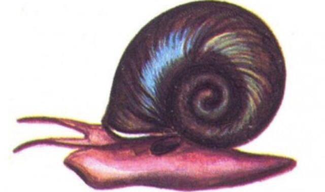 Катушка рисунок улитка