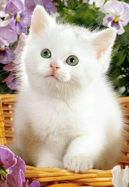 Анимации ангелочек, кот белый картинки для детей