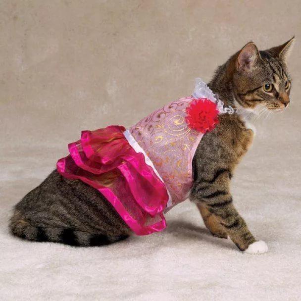 фигня картинки про одежду для кошек уже писал