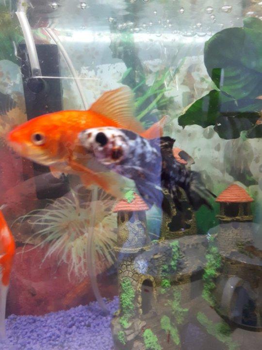 сарган - 100 гр - примерно 3 рыбки - Picture of Restaurant Che ...   720x540