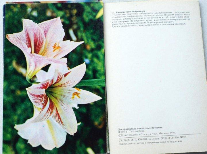 набор открыток декоративные комнатные растения кран отопителя, жар