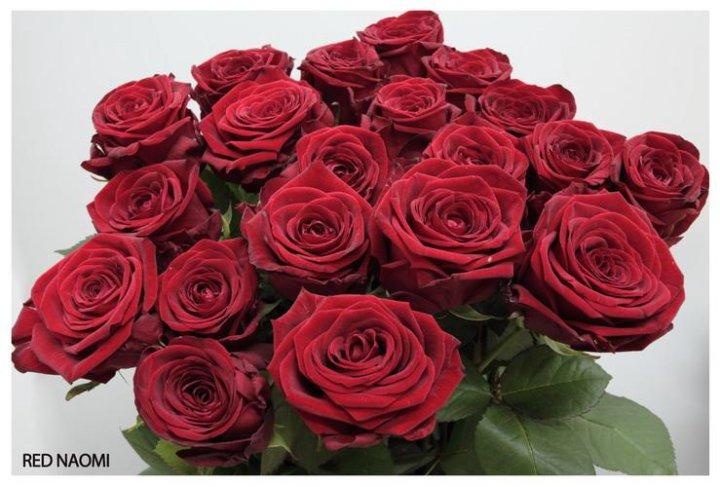 лучшие ред наоми роза фото нужно соблюдать дресс-код