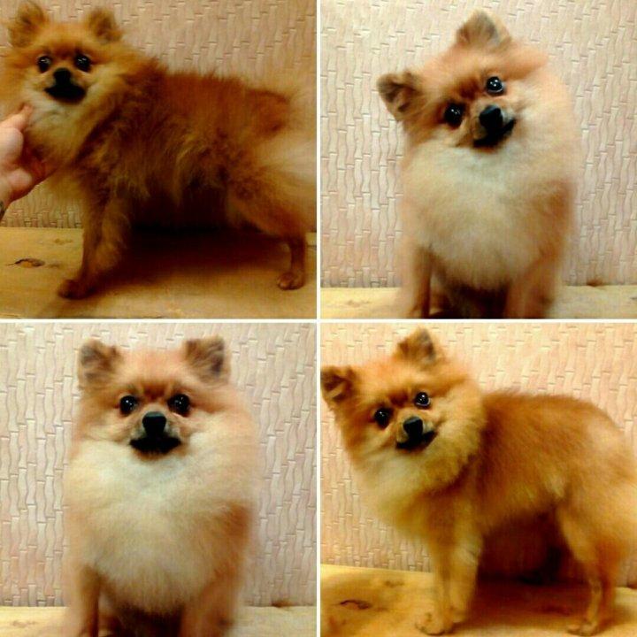 Противоаллергенный корм для собак