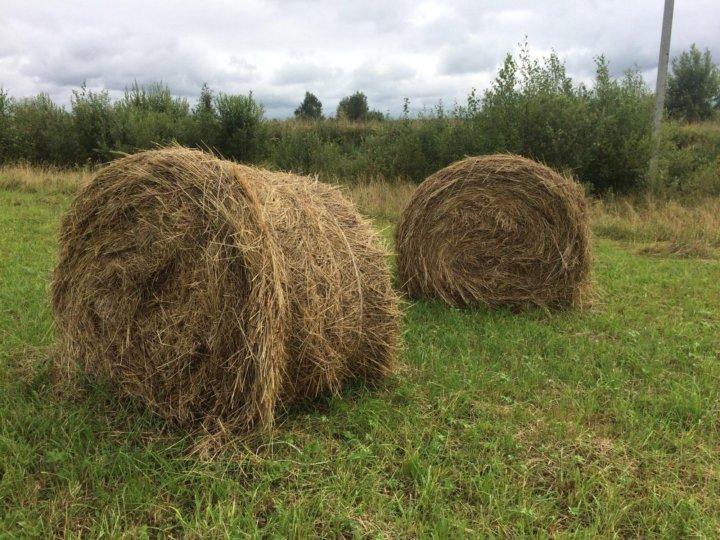 развития бобовое сено фото добрые стихи