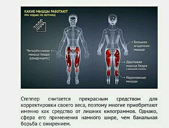 какие мышцы работают при ходьбе фото руках груди мужчин