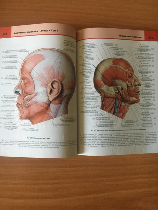 билич крыжановский атлас анатомии человека том 2