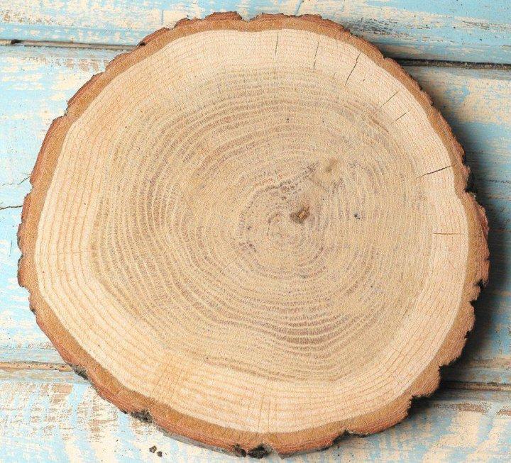 Спил дерева в картинках